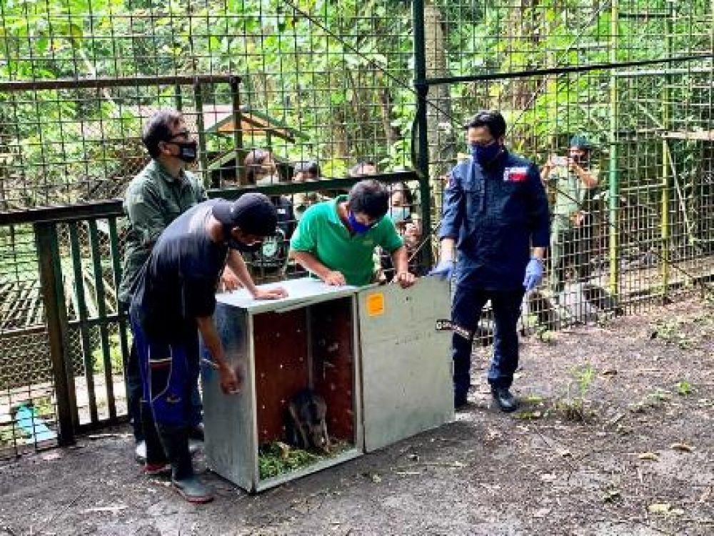 91 Satwa Endemik di Repatriasi dari Filipina