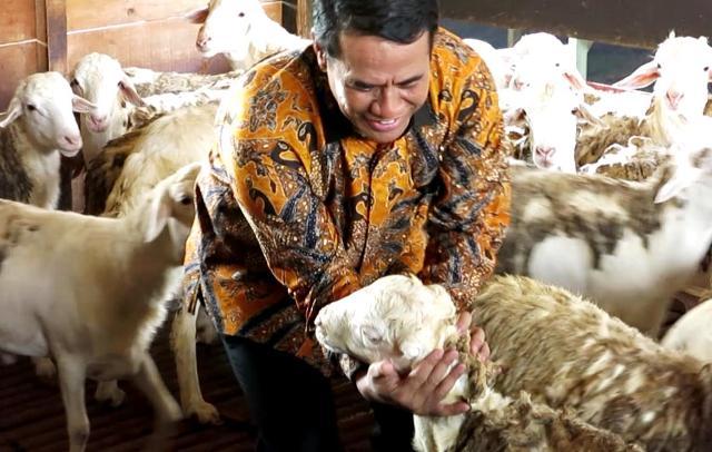 Indonesia Ekspor 60 Ribu Domba ke Malaysia