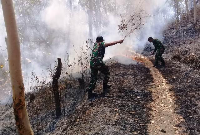 Hutan Karangpatihan Terbakar