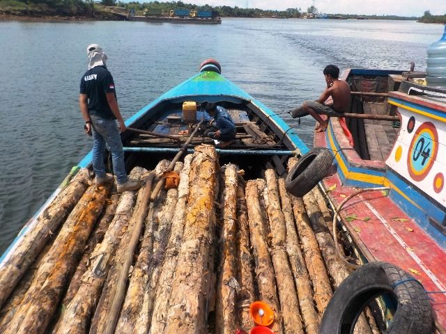 3 Pelaku Ilegal Logging Suaka Margasatwa Ditangkap