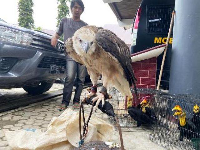 Perdagangan Burung Langka Samarinda Digagalkan