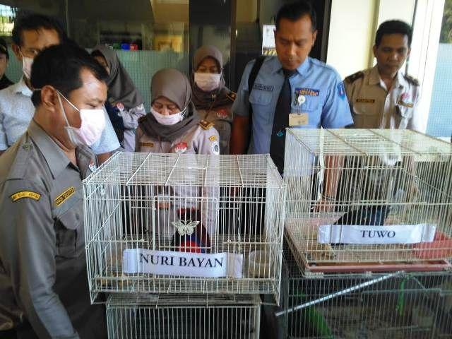Burung Makassar Selundupan Gagal Masuk Surabaya