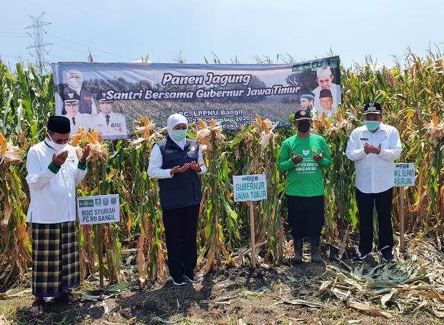 Gubernur Jawa Timur Panen Jagung di Beji