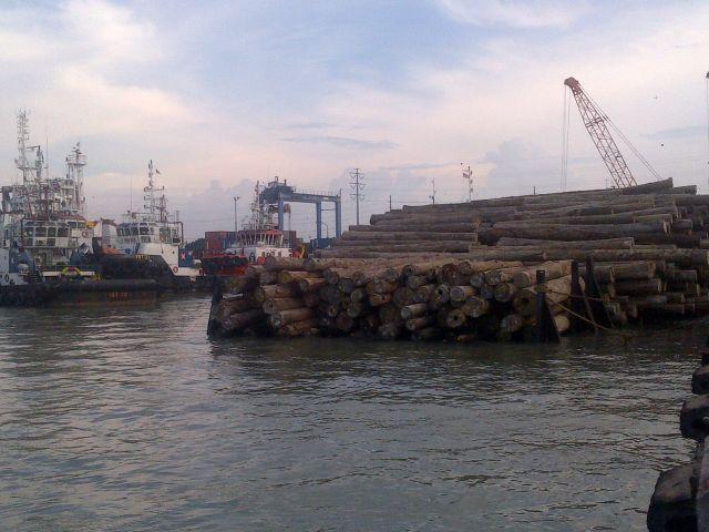 Clusterisasi Kayu Log Belum Diproses Otoritas Pelabuhan