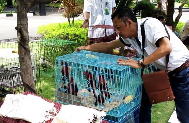 Polisi Tangkap Penyelundup Burung Asal Papua