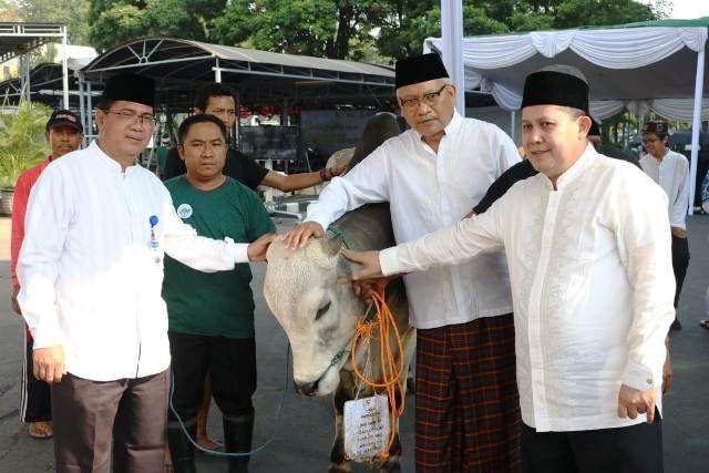 Bank Indonesia Beli Hewan Qurban Dari Peternak Binaan