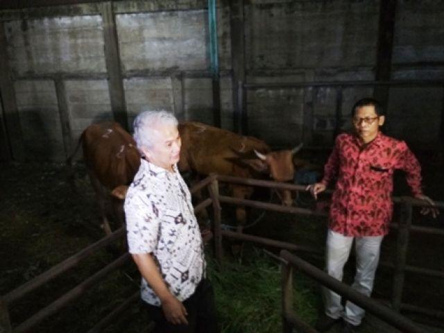 Stok Daging Sapi Ramadhan di Surabaya Aman