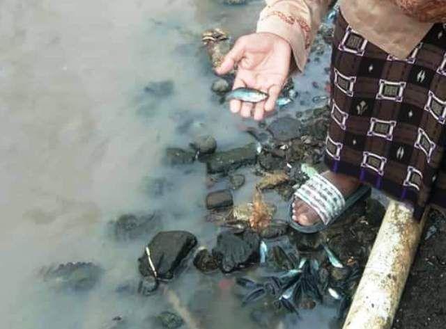 Ikan Mati, Limbah PT Indolakto Diduga Cemari Kali