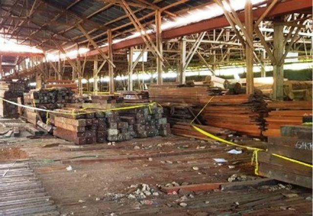 Praperadilan Tersangka Kayu Ilegal Papua Ditolak